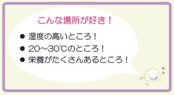 スクリーンショット 2015-09-19 13.25.58 - コピー (3)